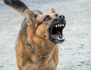 Viscous Dog Bites