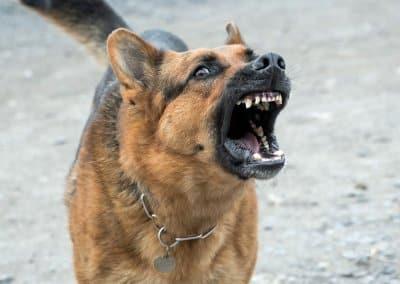 Dog Bites & Personal Injuries